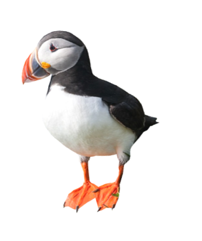 Isles of Scilly Puffin icon
