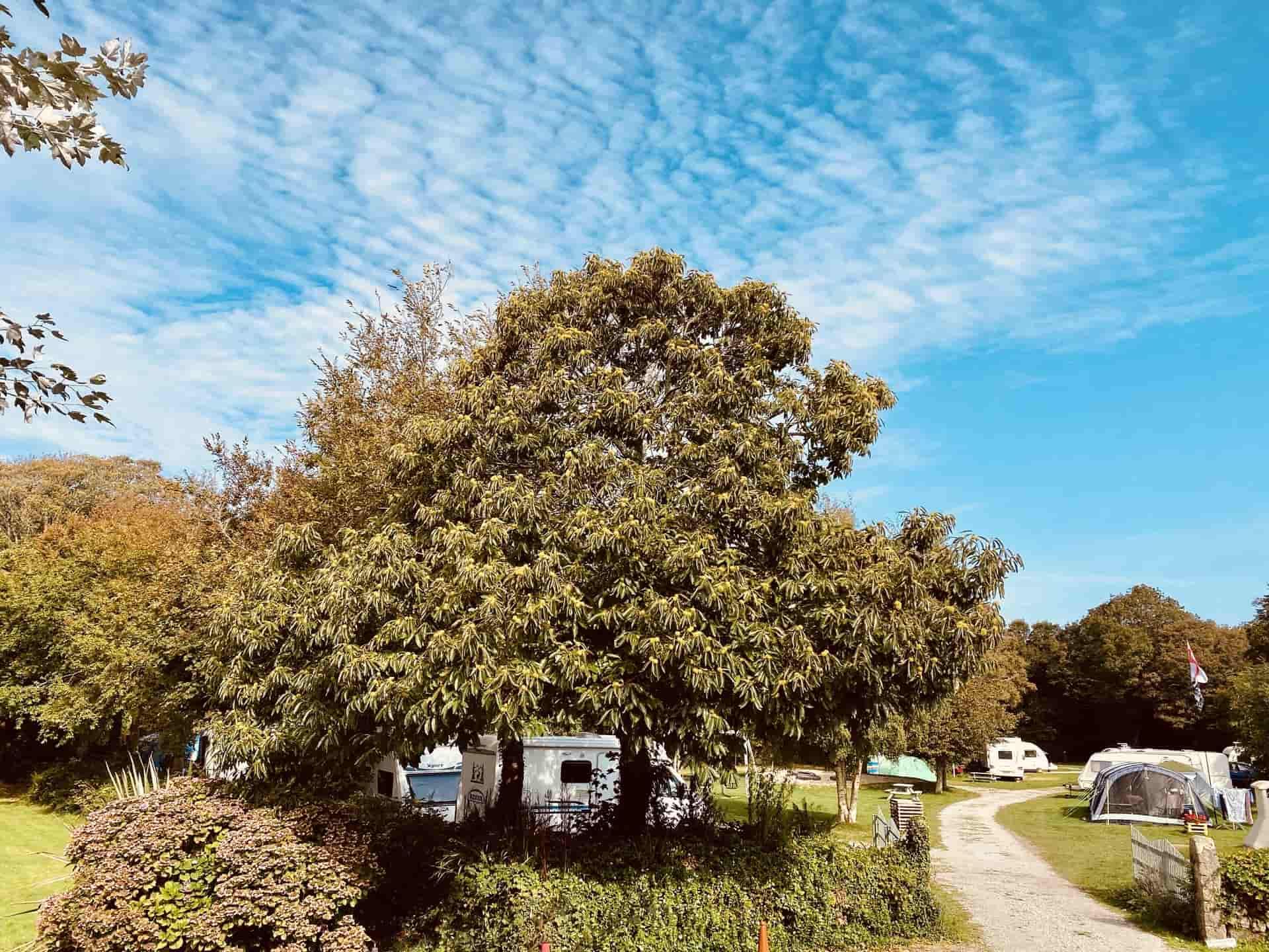 Treglisson Campsite near Hayle, Cornwall