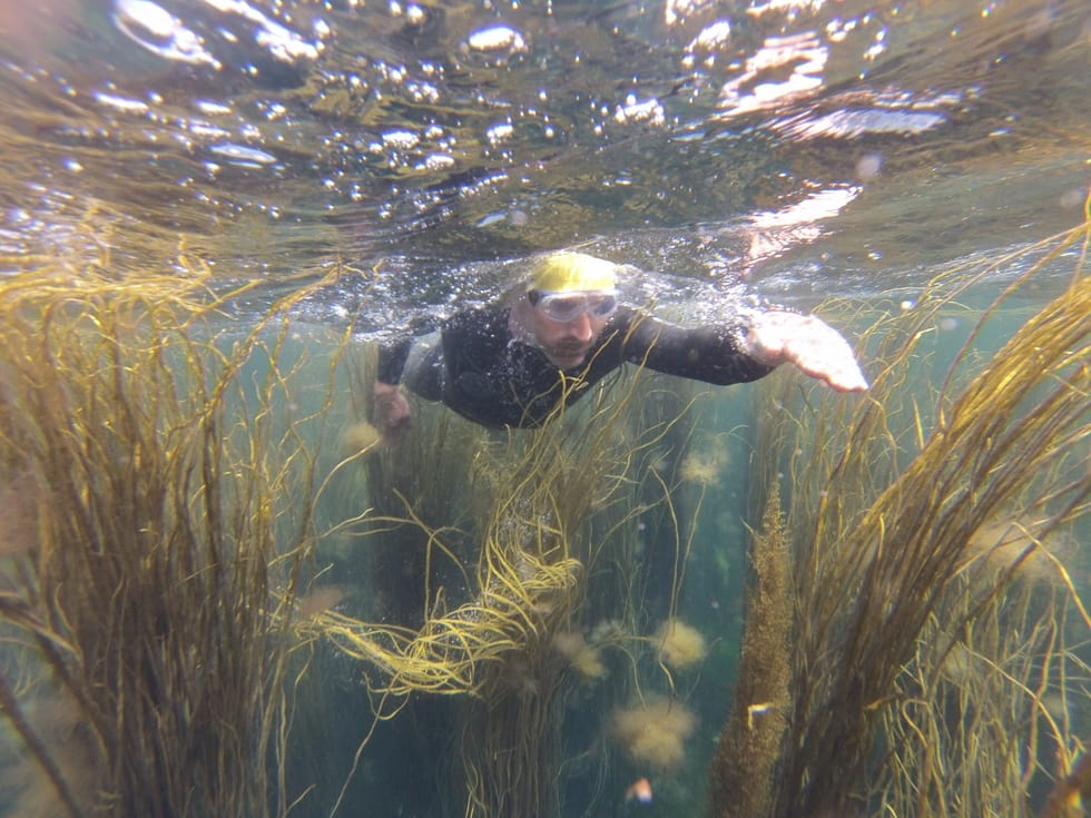 Underwater shot of a wild swimmer swimming through seaweed on the Isles of Scilly